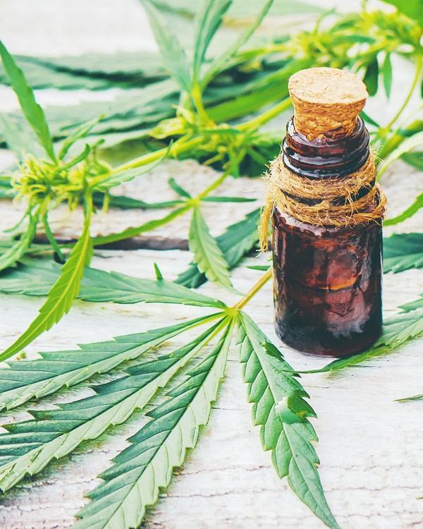 CBD oil with hemp leaves