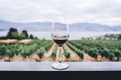 A glass of red wine with a vineyard background